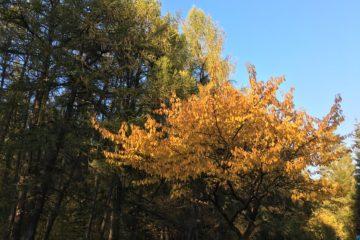 ein Baum mit Sinn im Herbst